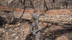 """Foto zwartgeblakerd kangoeroejong schokt wereld: """"Dit is de bikkelharde realiteit"""""""