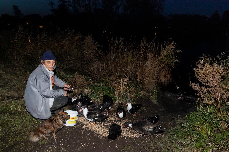 De voederplaats in Het Twiske waar Cor Hottentot de muskuseenden voert om de overlast voor inwoners van Oostzaan te beperken.