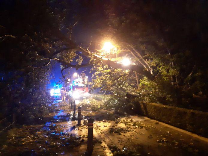 In de Wenduinesteenweg in De Haan waaide een boom over de rijbaan.