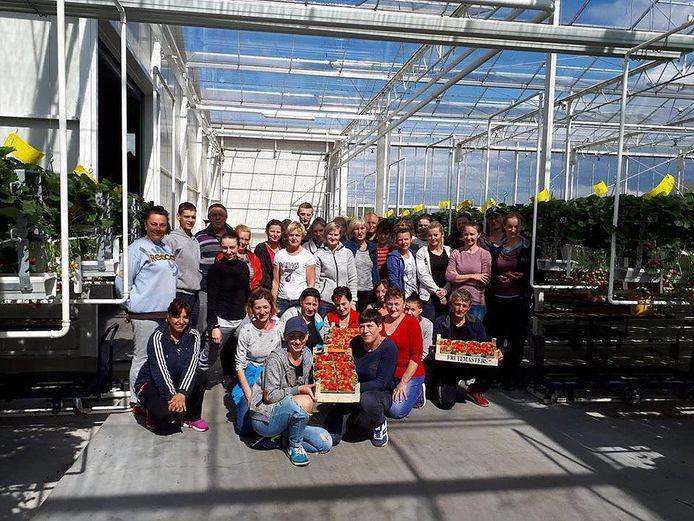 Werknemers van Scheffers in de aardbeienkas aan de Oliviersweg in Oisterwijk