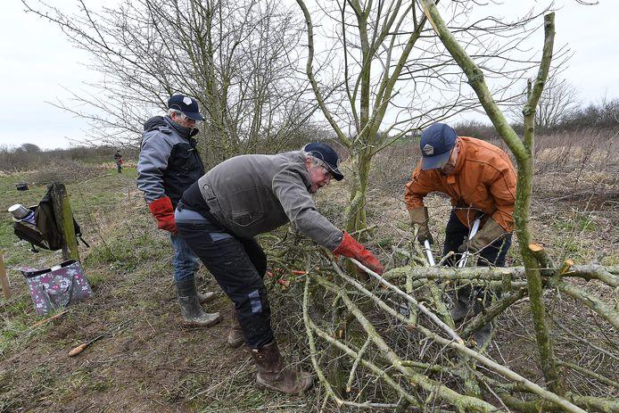 Links voor Willem van de Rijdt eerder in actie tijdens de 15e editie van het Nederlands Kampioenschap Maasheggenvlechten in maart 2020 in Oeffelt.