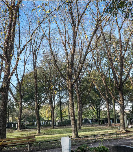 Begraafplaats Sambeek: geen nesten? Dan bomen omhakken