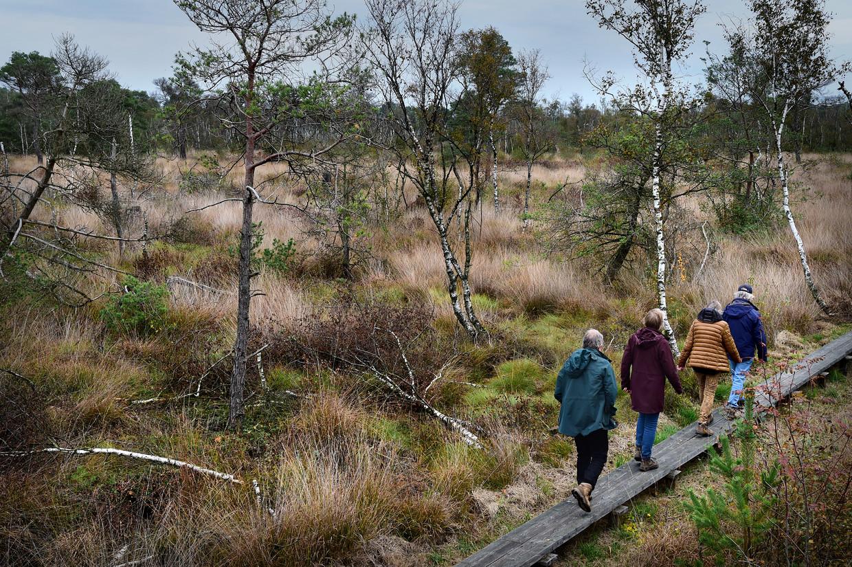 Wandelaars lopen over een plankenpad in het drassige hoogveen van Natura2000-gebied Wooldse Veen, dat hoge prioriteit krijgt van het kabinet bij de aanpak van stikstof.