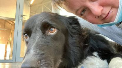 """Crowdfunding moet dure operatie Max terugbetalen: """"Zonder had ik hem moeten laten inslapen"""""""