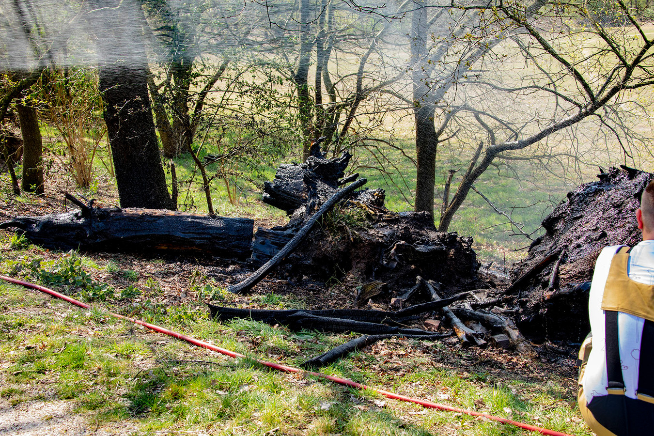 Boomstronk in brand in natuurgebied Oss