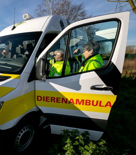 Hond dood na aanrijding door automobiliste in Oss blijkt noodlottig ongeluk