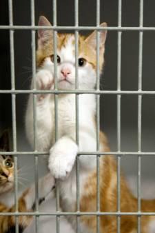 Gemeente in gesprek over beter dierenbeleid:  'Het is nu te versnipperd'
