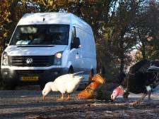 Poll: Ganzen en kippen met de functie van verkeersdrempels; een goed idee?