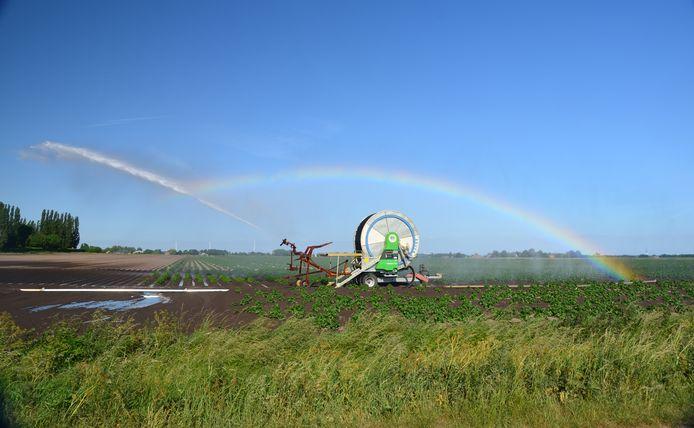 Droogte in de landbouw. Beregenen van een akker in West Brabant.