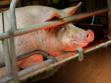 'Gemeente houdt informatie over  varkensstal in Leersum achter'