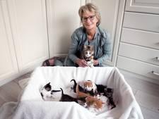 Hallo Nederland besteedt aandacht aan verwaarloosde straatkatjes