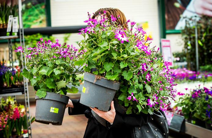 De plantjes kunnen naar buiten, IJsheiligen is voorbij en de lente is in aantocht.