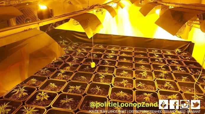 In een woning aan het Anton Pieckplein in Kaatsheuvel werden hennepplantjes en harddrugs aangetroffen.