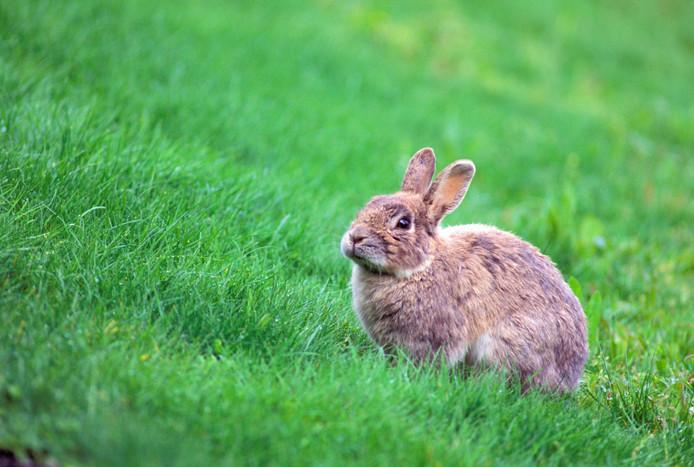 Een konijntje.