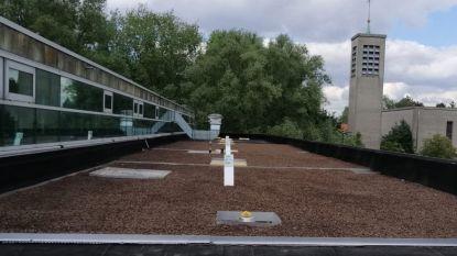 Stad zaait dak van OCMW-gebouw vol planten die bijen, vlinders en andere insecten aantrekken en doopt het 'zoemdak'