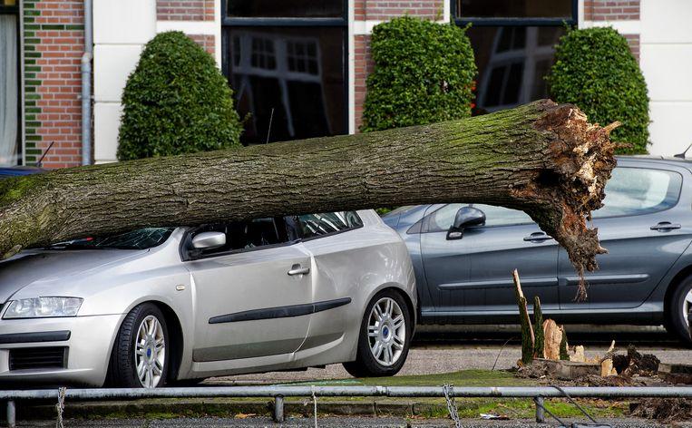 Een omgewaaide boom in Amsterdam is boven op een auto gevallen. Beeld anp