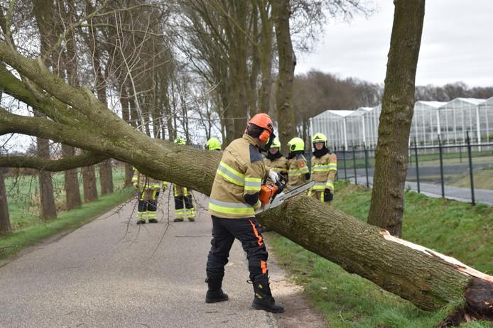 Op de Hoge Heiligeweg in Ammerzoden zijn meerdere bomen omgewaaid. De weg is door de gemeente afgesloten.