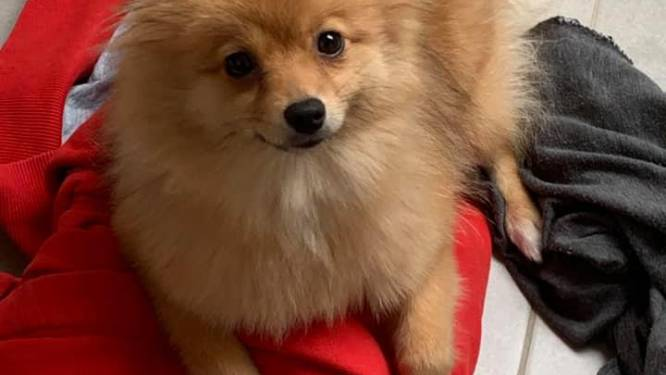 """Fluffy werd doodgebeten door loslopende hond: """"Is het zoveel gevraagd om een leiband te gebruiken?"""""""