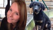 Hondje Nellie veilig en wel thuis nadat ze geschrokken wegliep na ongeval