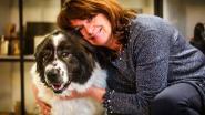 Dierenasiel wil hond Laika opnieuw pijnloos laten wandelen en zoekt 7.000 euro voor heupoperaties