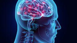 Onderzoek toont aan dat brein nog actief is nadat lichaam geen teken van leven meer vertoont