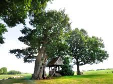 Pancratiusdag bij Kroezeboom in Fleringen in teken Samenloop voor Hoop