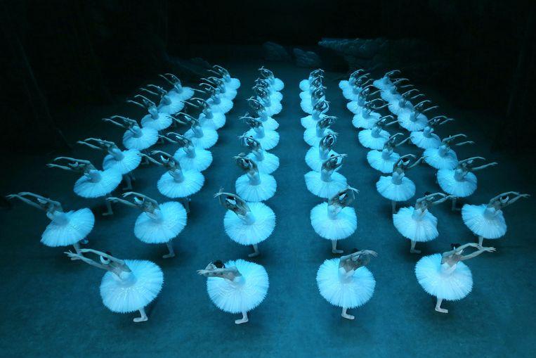 Het Zwanenmeer van het Shanghai Ballet is tot 10 september te zien in Carré, Amsterdam en gaat daarna op toernee door Nederland. Beeld RV