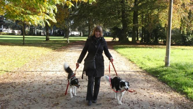 """""""Strenger optreden tegen loslopende honden!"""": hond van raadslid Rudi Desmet werd zelf aangevallen"""