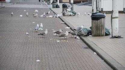 Steeds minder meeuwen in Vlaanderen