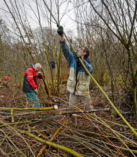 Boomkikker op landgoed in Enschede komt dankzij vrijwilligers in een gespreid bedje terecht