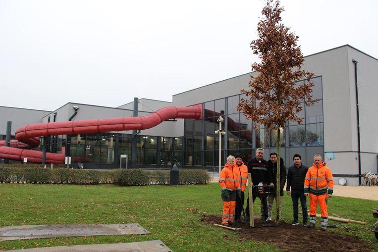 De boom werd deze keer geplant aan het zwembad van Geel.