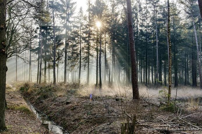 Oude Lenferink heeft niet aan de overeenkomst voldaan, zegt het college dat met hem zou hebben afgesproken dat hij bomen zou herplanten.