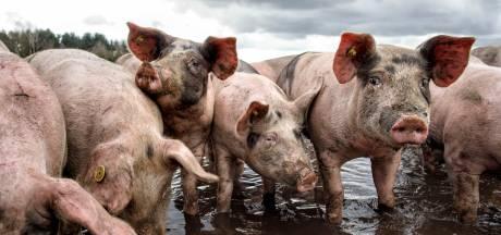 LTO: Gelderland moet boeren aan grond helpen om omslag te maken