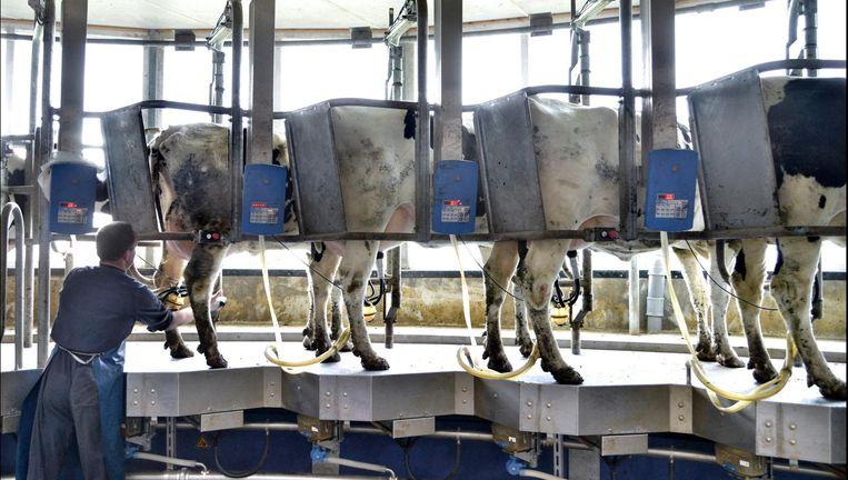 Melkcarrousel bij een melkveebedrijf. Beeld Hollandse Hoogte/Flip Franssen