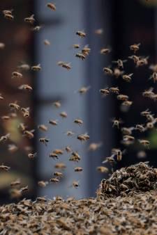 Des milliers d'abeilles s'installent sur le cockpit: l'avion cloué au sol