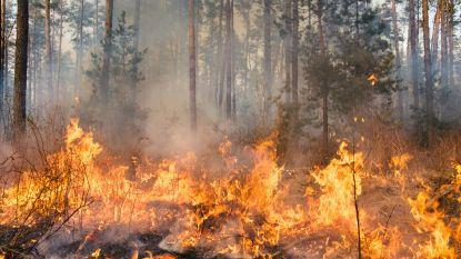 """Wetenschappers waarschuwen EU voor """"desastreus"""" plan om bomen te laten verbranden"""