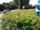 Oisterwijk pakt 'gevaarlijk groen' aan: dodelijk ongeluk als in Moergestel mag niet meer gebeuren