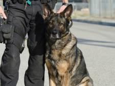 Politie zocht met honden naar gewapende verdachte in Schijf