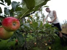 Fruitbedrijven in de Noordoostpolder mogen meer reclame maken