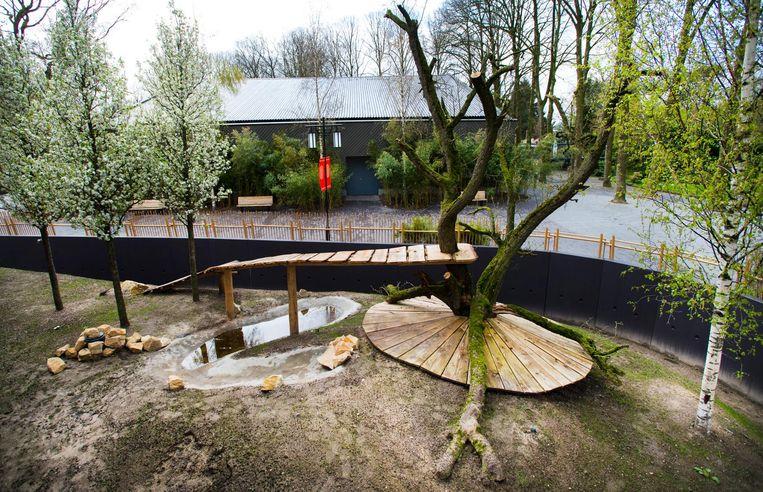 Vanaf komende week levert een Brabantse kweker elke week 700 kilo bamboe af, 50 kilo per panda per dag. In verschillende smaken. Om het dieet aan te vullen, hebben onze pandaverzorgers in China geleerd hoe ze pandacake moeten bakken, een versnapering met allerlei extra voedingsstoffen. Beeld anp