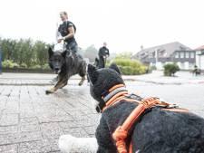 Hardlopen met je hond bij Canitrail in Hellendoorn: 'Alleen is zo saai'
