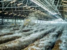 Brabantse buren klagen staat aan voor overlast door veehouderij: 'Woongenot is een grondrecht'