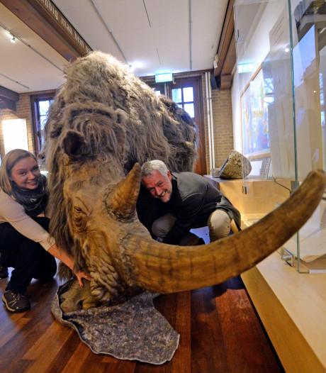 Museum Denekamp omarmt 'nieuwe bewoner' de wolharige neushoorn