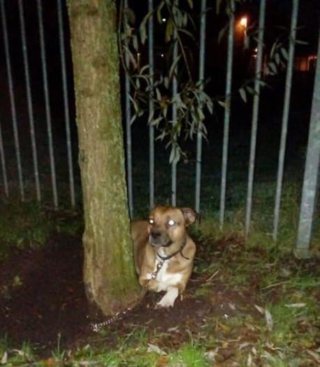 Eibergse (27) krijgt werkstraf voor vastbinden hond: 'Geen zin om mee te slepen'