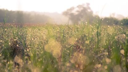 Gedaan met zomers weer: gevoelig frisser en bewolkt
