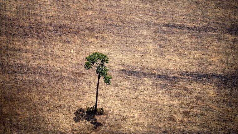 Een ontbost deel van het Amazonegebied. Beeld null