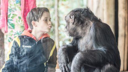 Achtbanen die nierstenen doen verdwijnen en apen die mensen na-apen: dit zijn de winnaars van de IgNobelprijzen