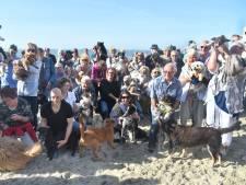 Petitie tegen losloopverbod honden op Vlissings strand