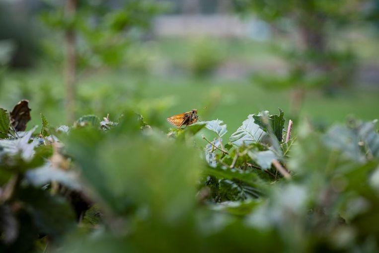 Motten vormen een belangrijke voedselbron voor vleermuizen, spinnen en vogels