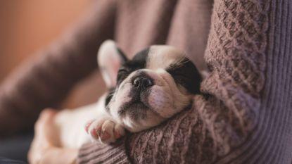 Wat je moet weten over het slaapgedrag van je viervoeter